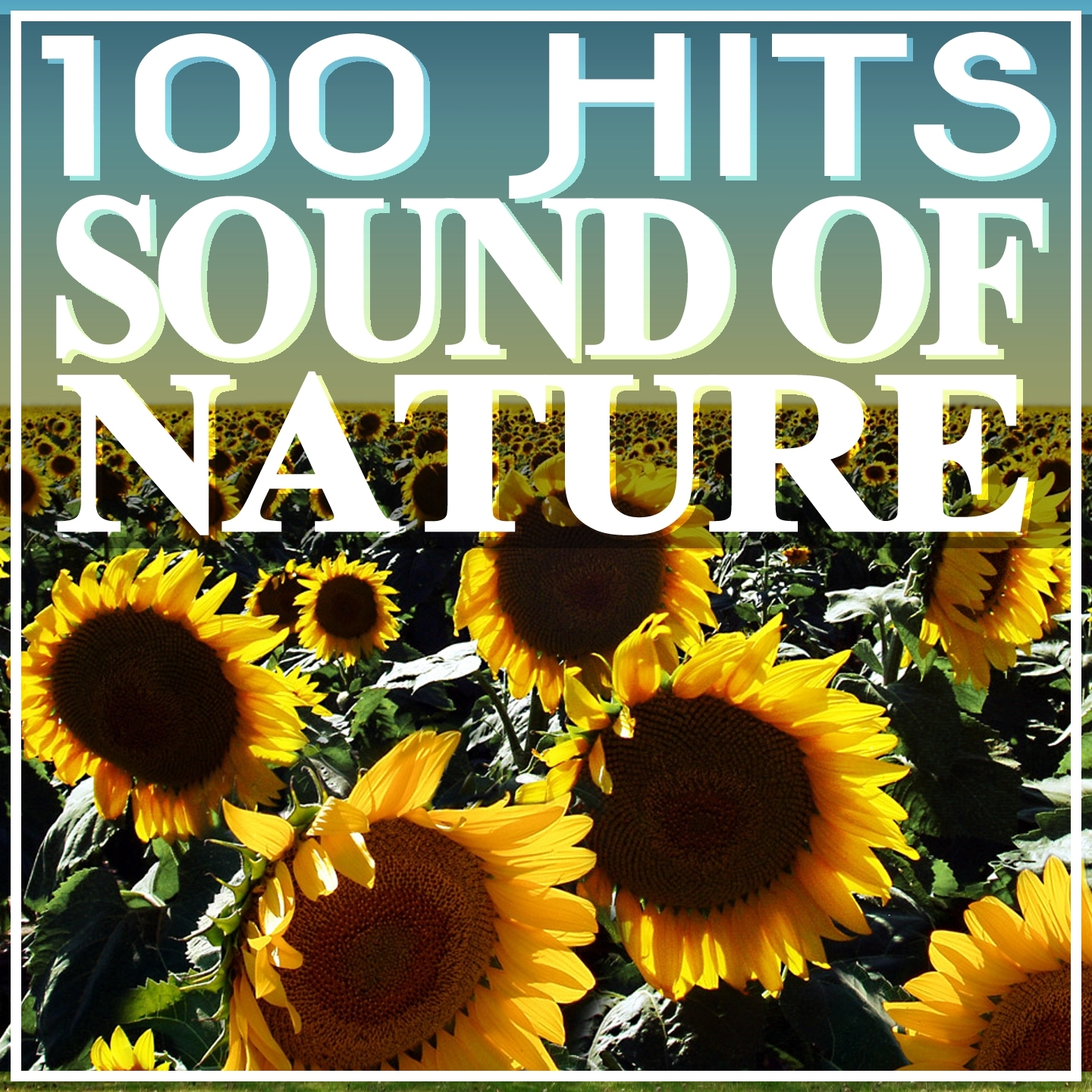 100 Hits Sound of Nature