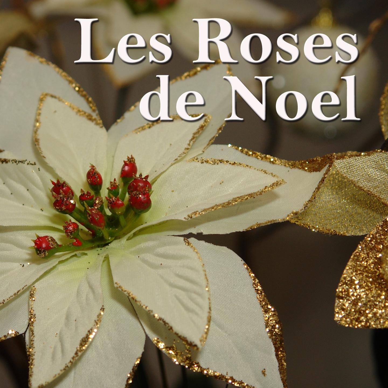 Les roses de Noel