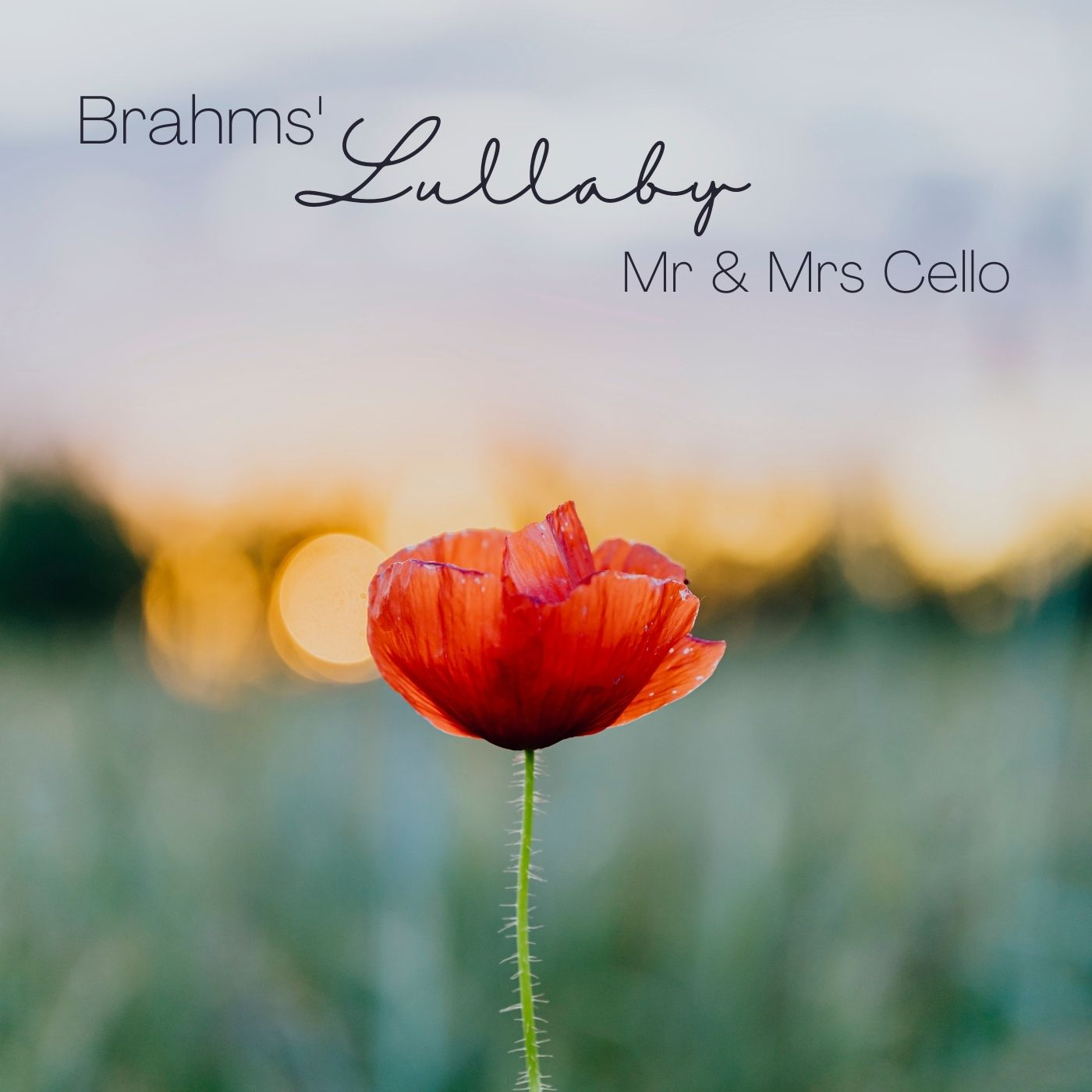 5 Lieder, Op. 49: No. 4, Wiegenlied. Zart bewegt [Brahms' Lullaby (Arr. for Two Cellos)]